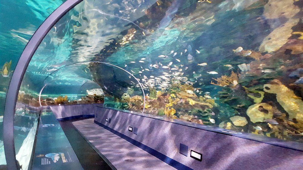 Ripley's Aquarium of the Smokies Coupon – Get a Free Ticket On Us. Posted February 26, by Lindsey Stallings. Ripley's Aquarium of the Smokies in Gatlinburg is the most visited aquarium in the country, and voted #1 on TripAdvisor.